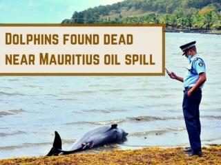 Dolphins found dead near Mauritius oil spill