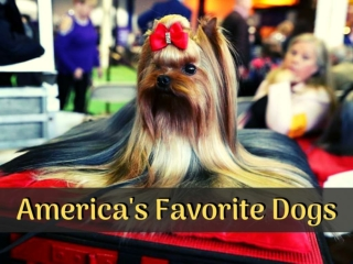 America's favorite dogs